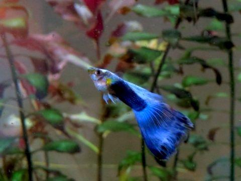 blue fish.jpeg