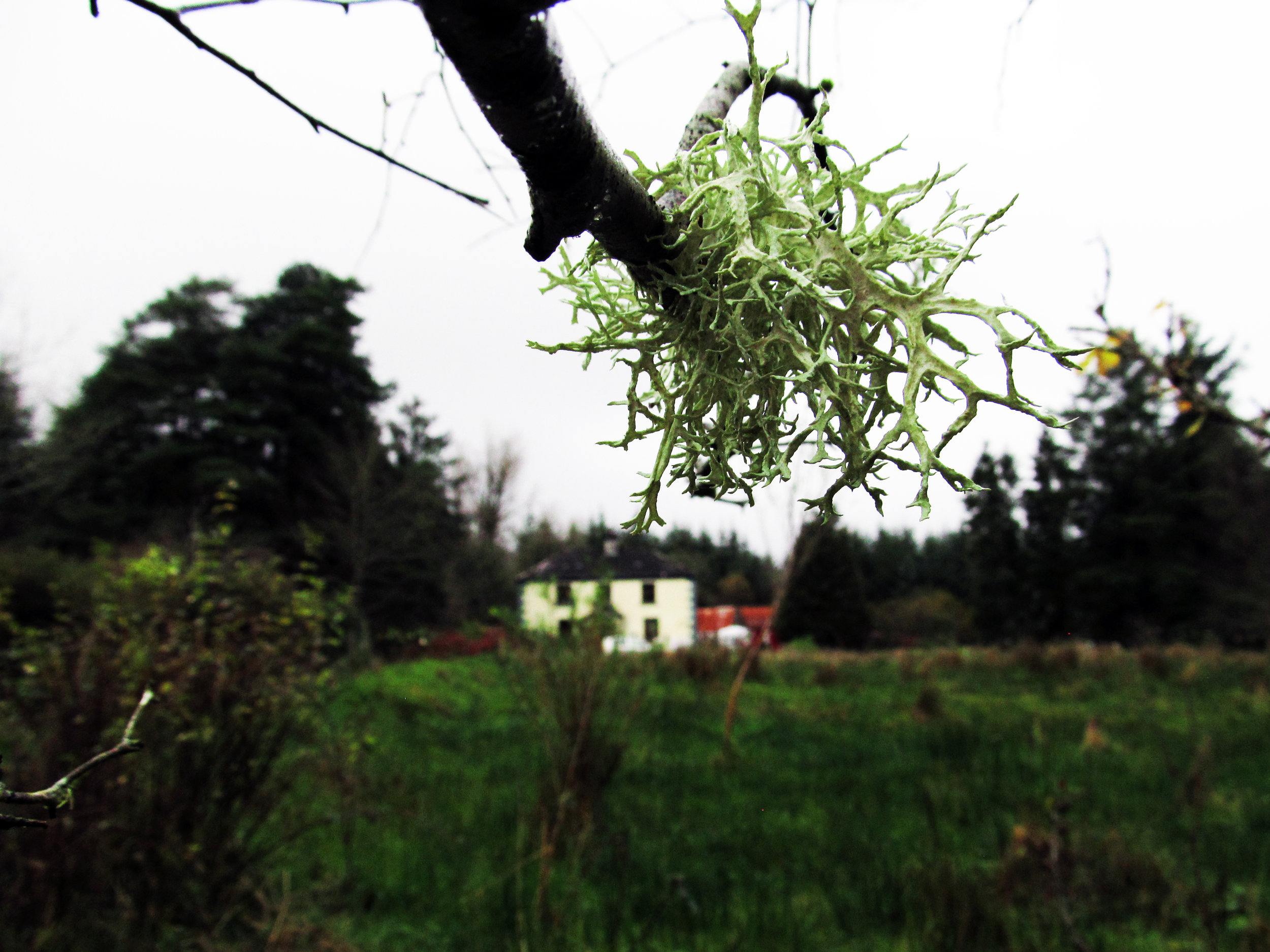 house and lichen.jpg
