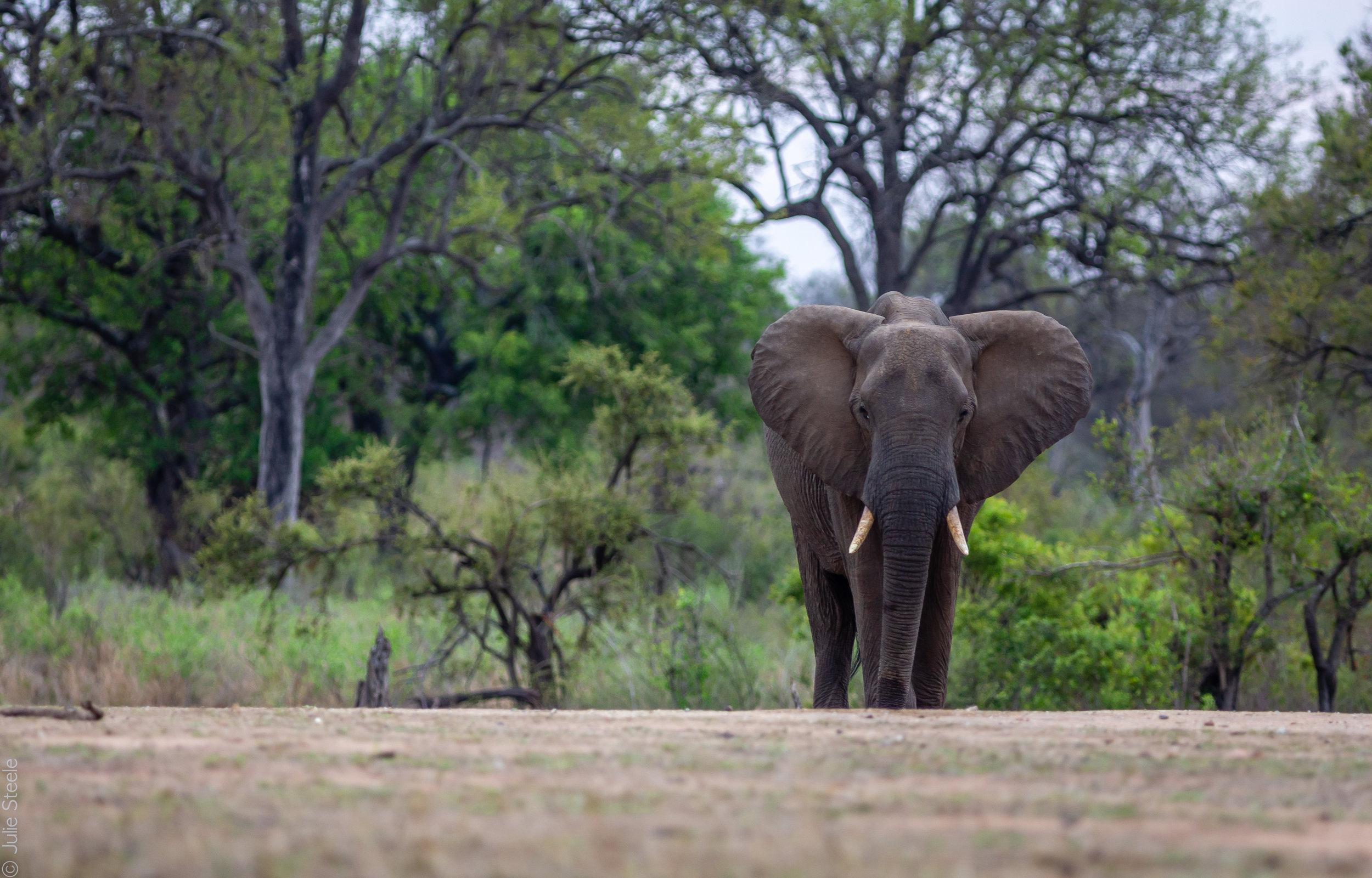 Kruger Day 9-56.jpg