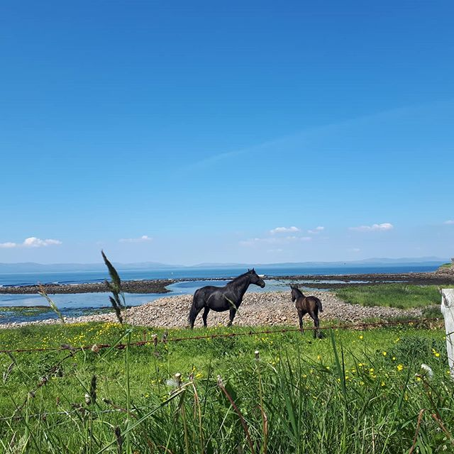 Our neighbours 😊 Baby horse and baby mama are quite enjoying the sunshine this week. Baby horse has learnt to run (ish) and looks surprised every time he takes off. It's very entertaining 🐎 Stay tuned for more horse news. * * * #horses #horsesofinsta #tullaghan #leitrim #wildatlanticway #ireland #failteireland #donegalbay