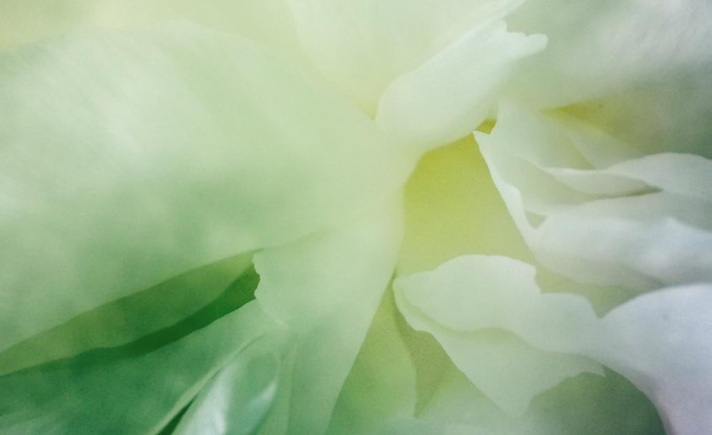 H.P.crop1-517405923.765681.jpg