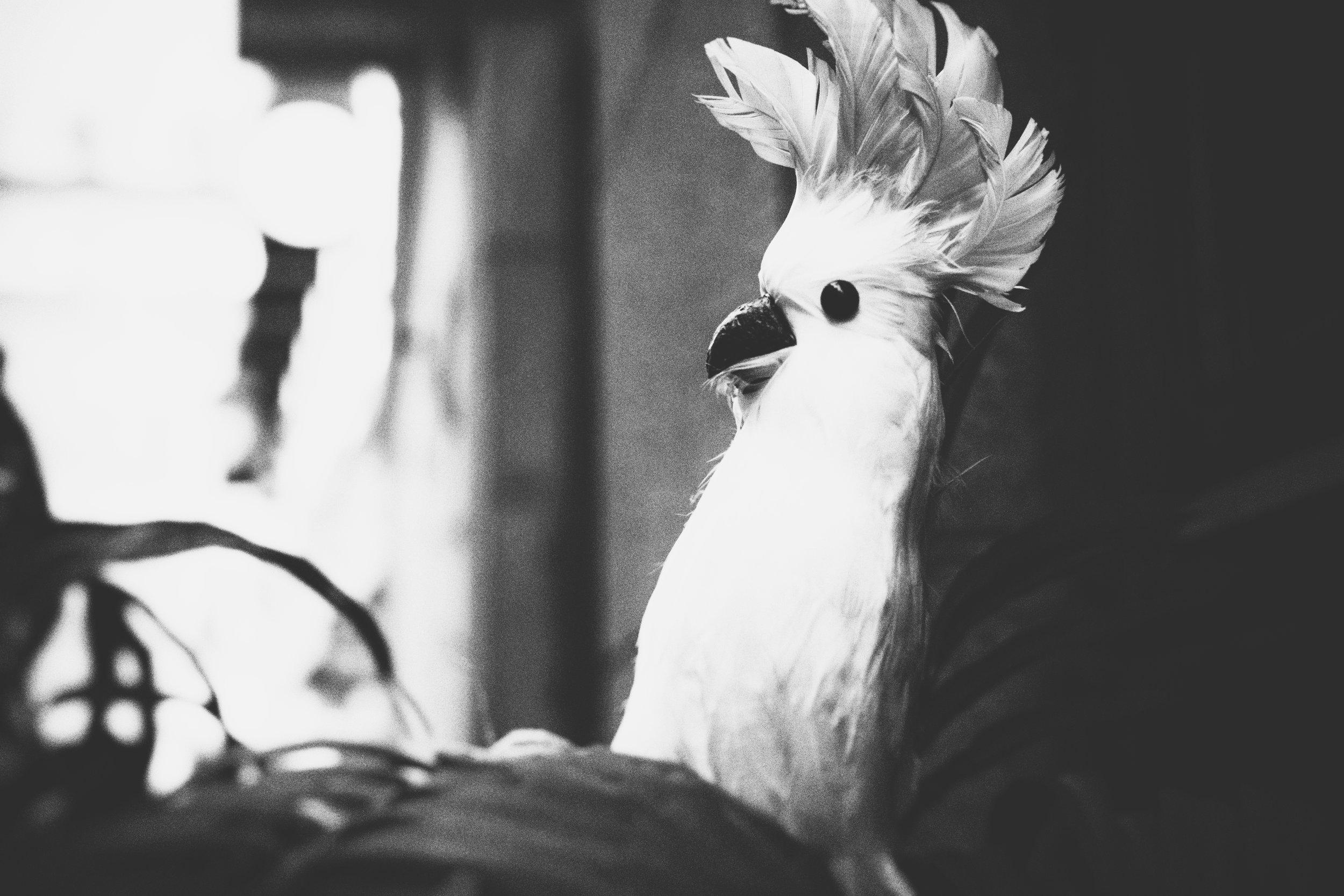 fugl.jpg