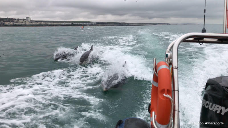 2018: Brighton Dolphin Project, a project of the World Cetacean Alliance is launched!