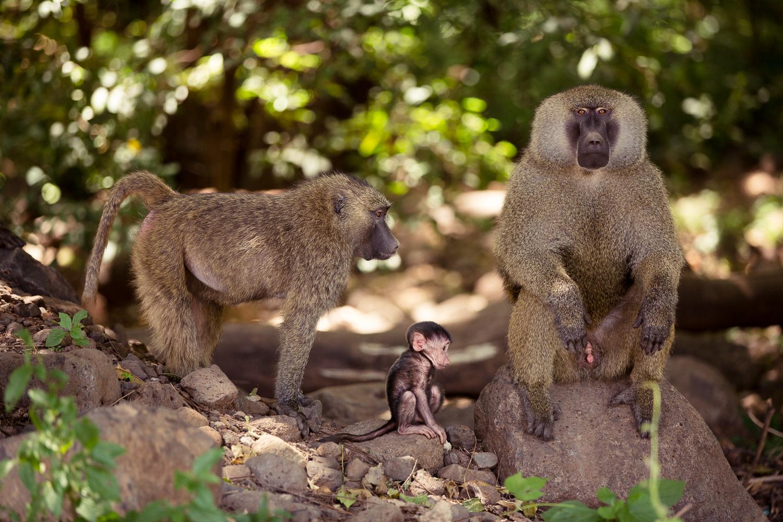 Wildlife_Africa-1.jpg