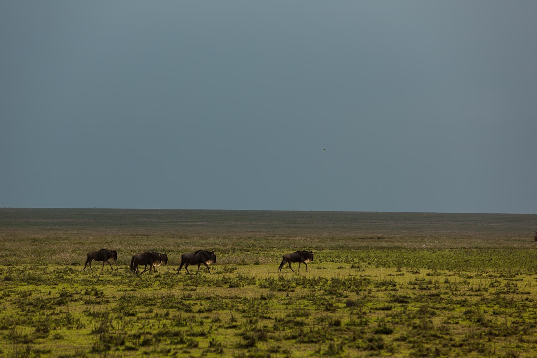 Wildlife_Africa-32.jpg