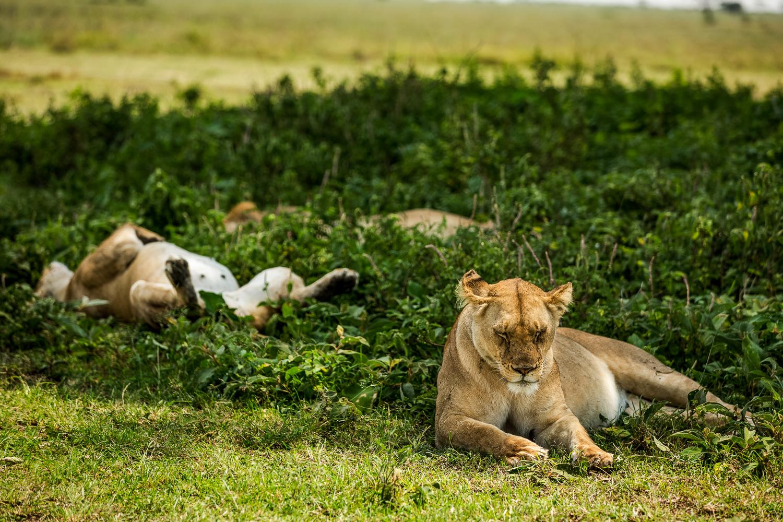 Wildlife_Africa-64.jpg
