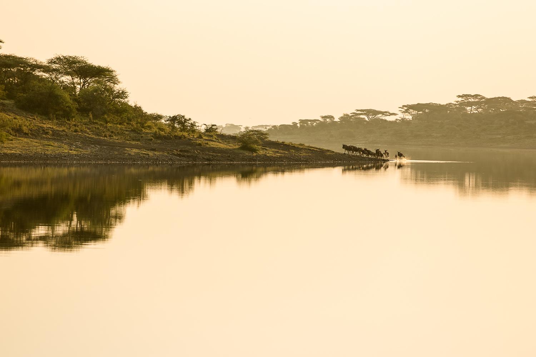 Wildlife_Africa-101.jpg