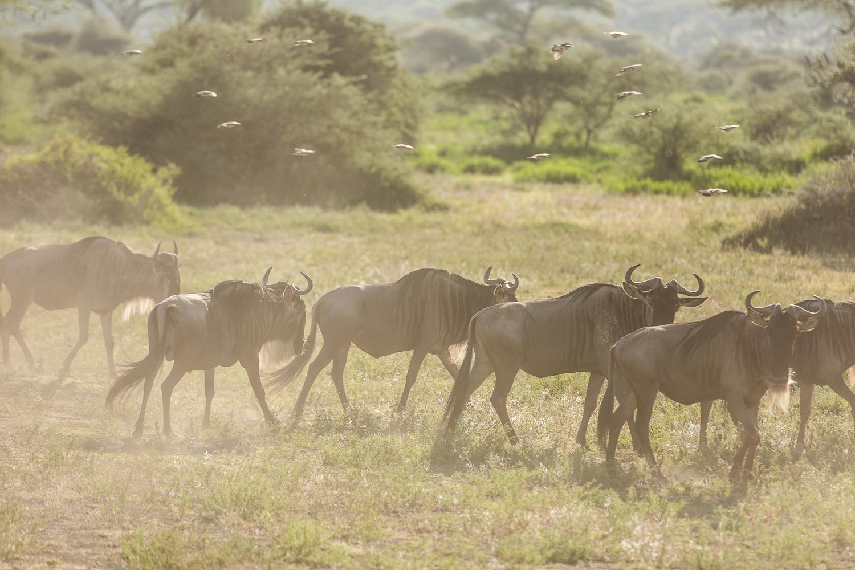 Wildlife_Africa-107.jpg