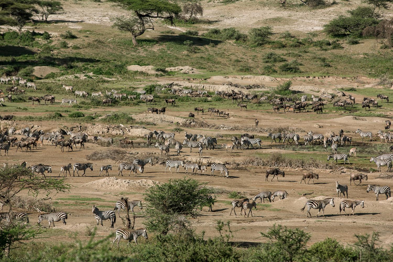 Wildlife_Africa-108.jpg