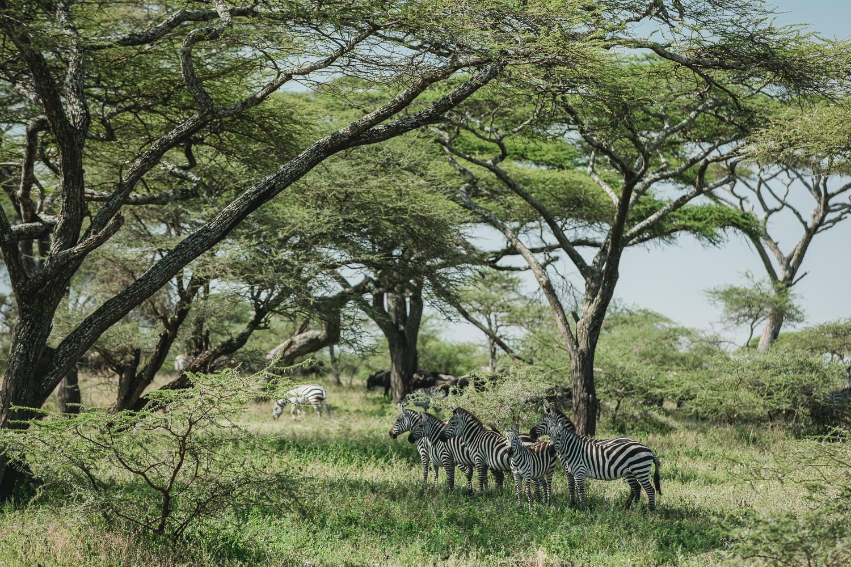 Wildlife_Africa-114.jpg
