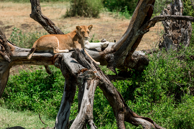 Wildlife_Africa-122.jpg