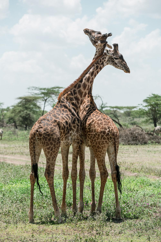 Wildlife_Africa-124.jpg