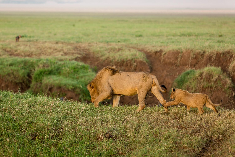 Wildlife_Africa-134.jpg