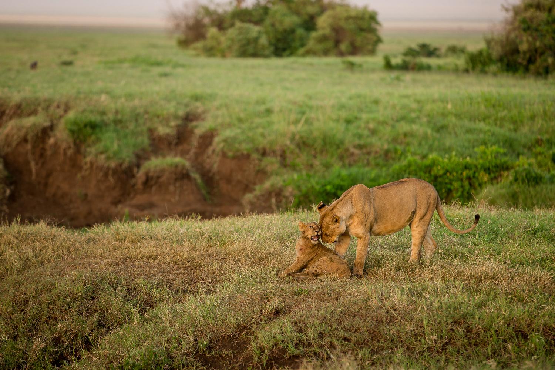 Wildlife_Africa-138.jpg