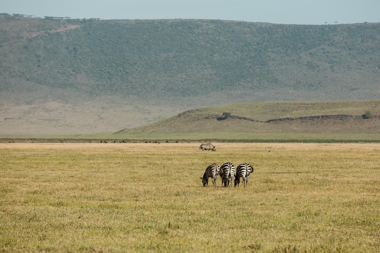 Wildlife_Africa-152.jpg