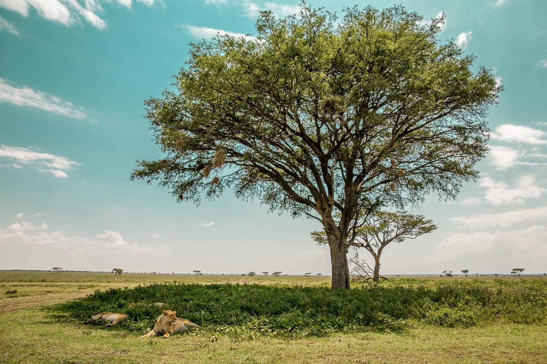 Wildlife_Africa-66.jpg