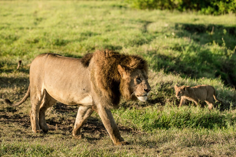 Wildlife_Africa-143.jpg