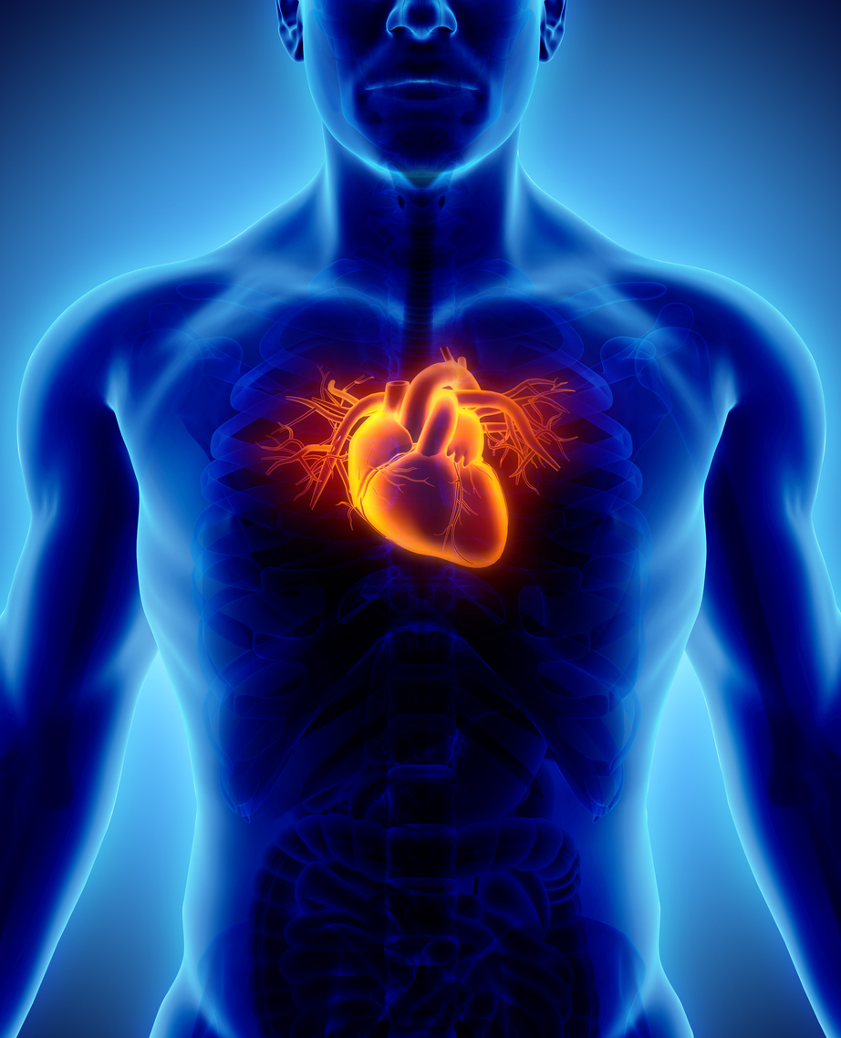 Every day your heart beats 100,000 times, sending 200 gallons of blood surging through your body. - Learn about nutrients that support your heart.