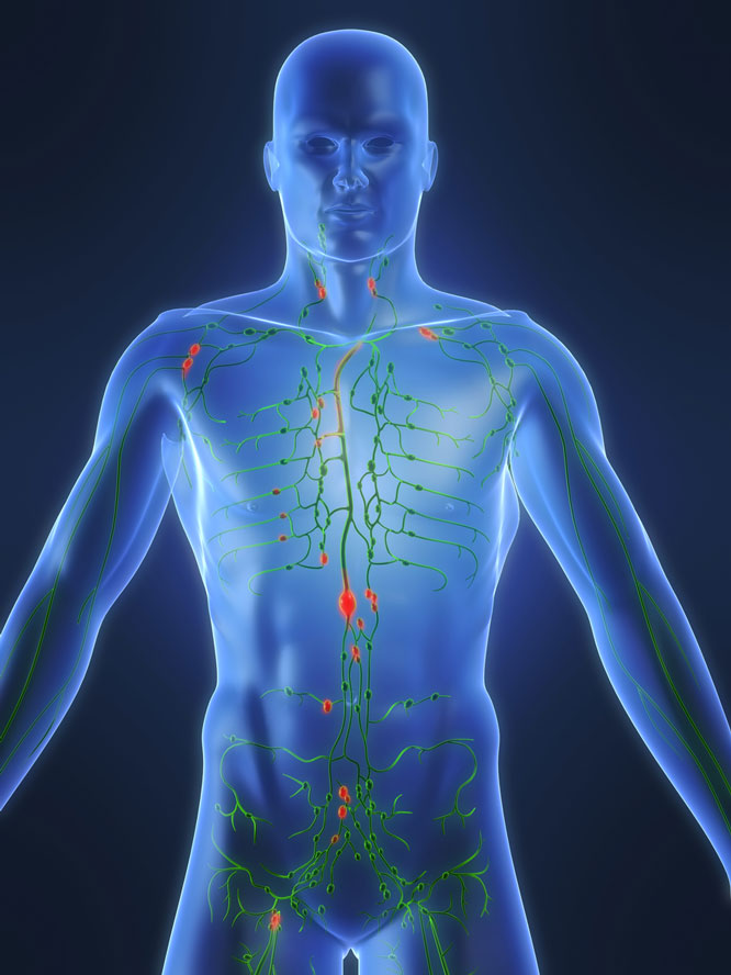 The lymphatic system is your immune system's first defense. - BOBBI SMEDLEY, BCPP