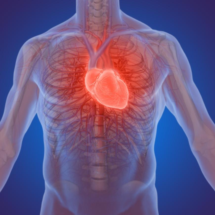 heart sound recorder test