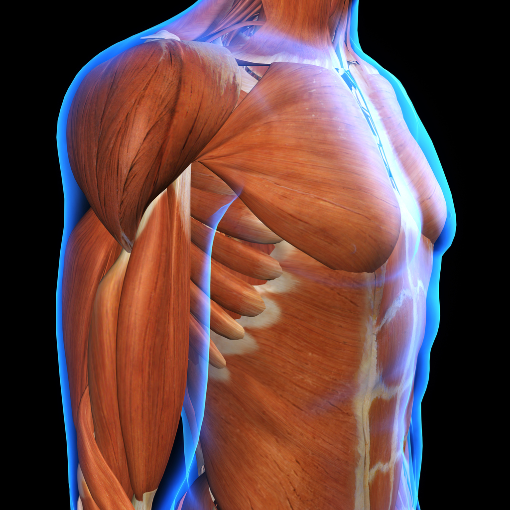 Our fascia covers our muscles and interweaves itself throughout our entire body all the way down to the cellular level. -