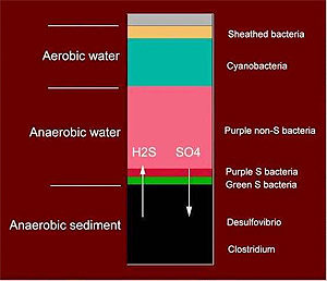 The many different microbial ecosystems in the sediment at the bottom of the lake