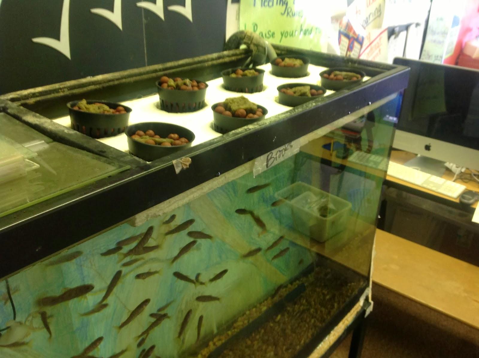 aquaponics setup.JPG