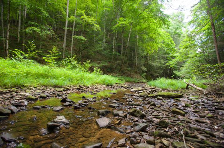 UK Forest.jpg