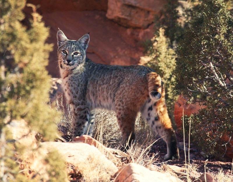photo credit: USGS