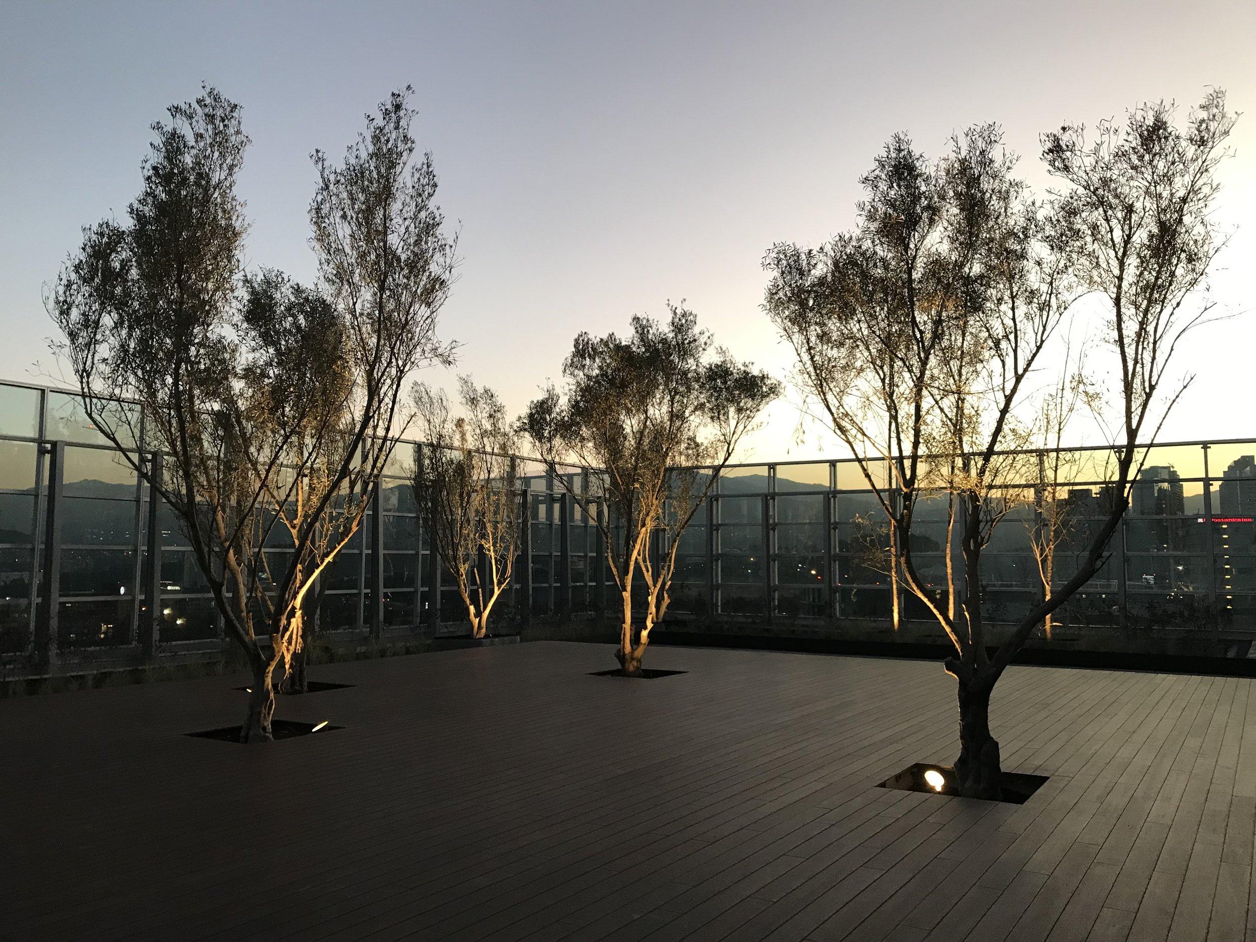 Park Plaza Torre III - Azoteas Verdes