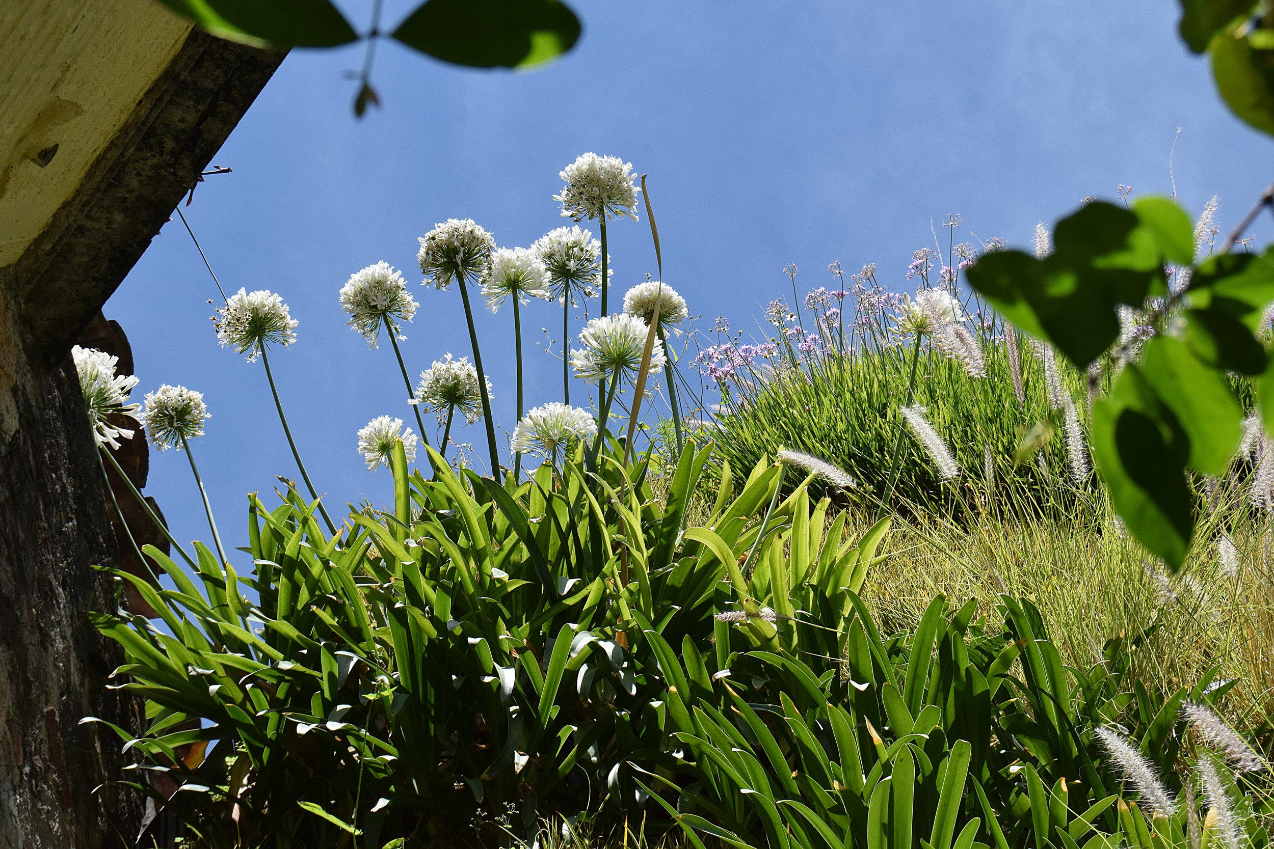 Plantica Quinta Real 6