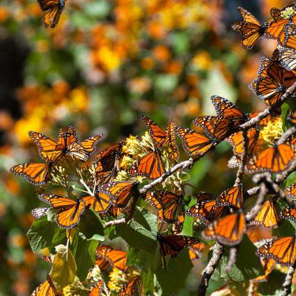 monarcas.jpg