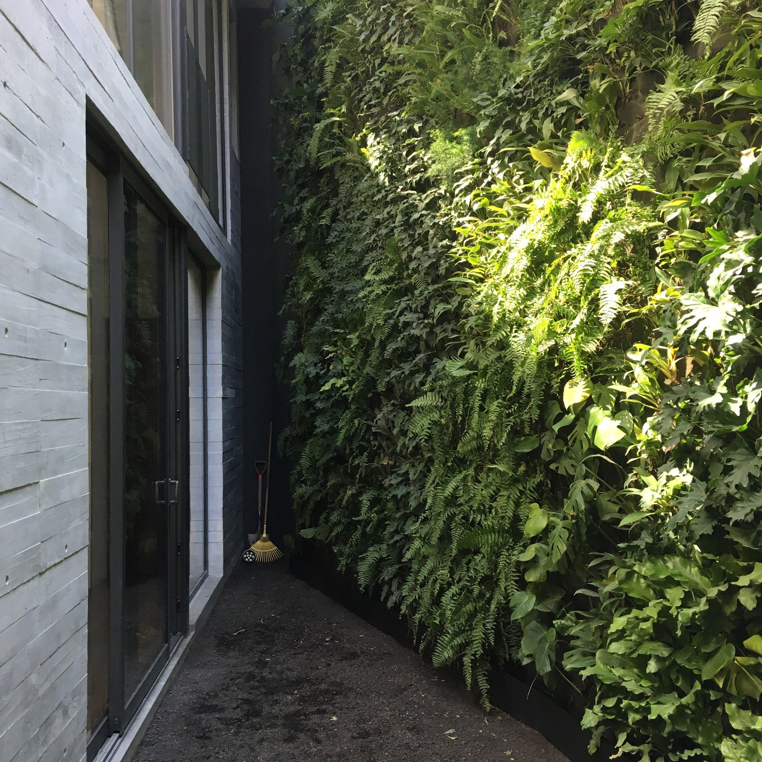 Casa Privada - Jardines Verticales