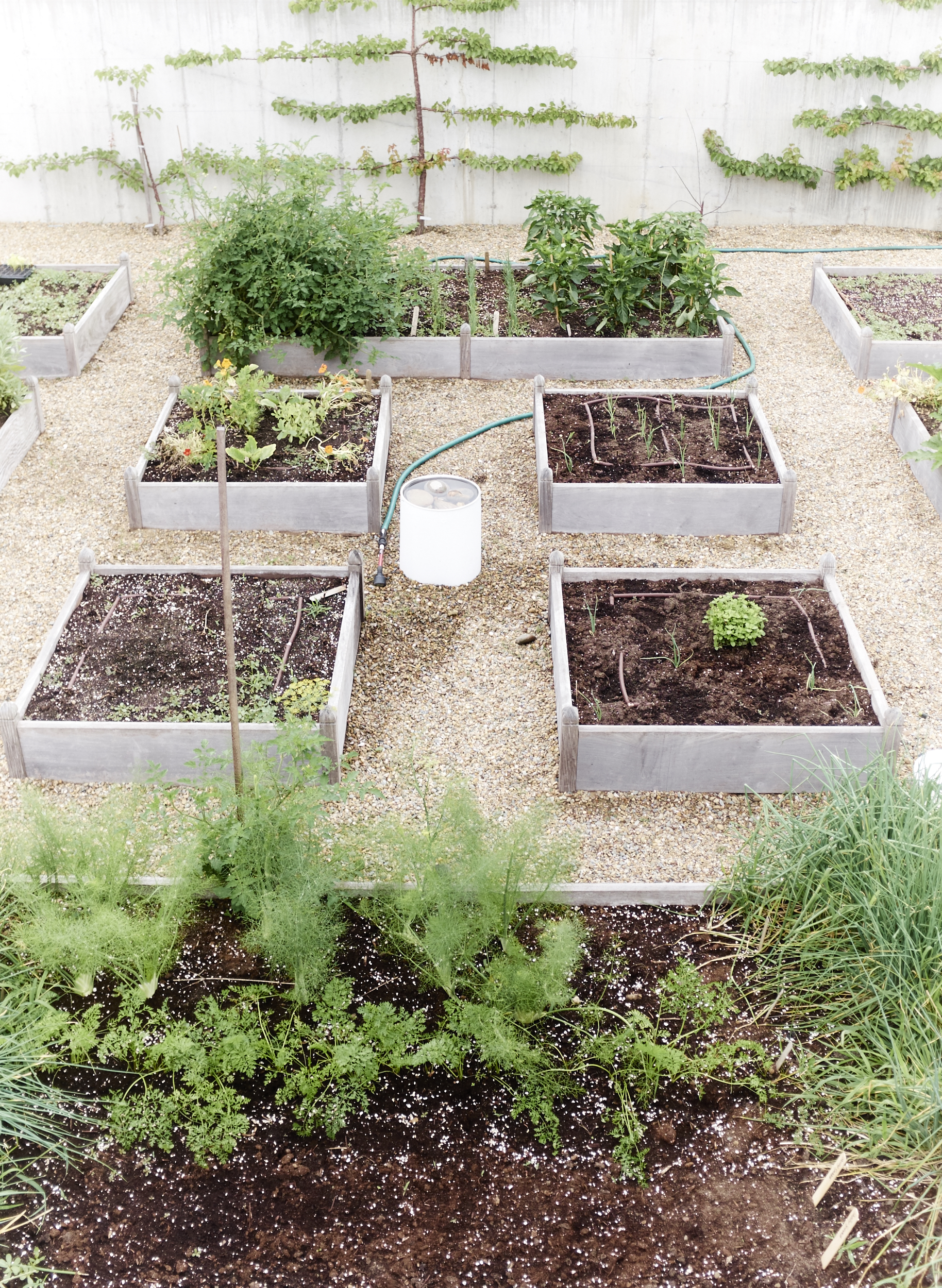 Family Garden -