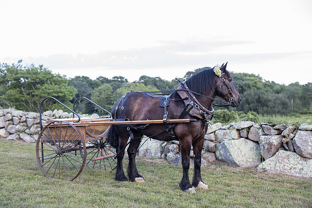 Hay Rides Across the Farm - Saturday, May 25th10am - 12noon20$ per Adult / 10$ per childCome and join us for a fun ride around the farm with our special visitors, Sonnyside Rides. Sonnyside Rides will bring their magnificent Percheron draft horses (each weighing in at 2100 lbs), provide a unique mode of transportation and once in a lifetime photo opportunities.Reservations not required. Meet at the farmstand.