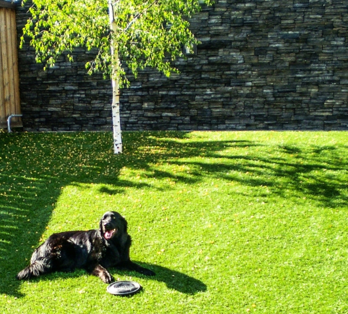 Residential Land and Pet Turf using Perfect Turf