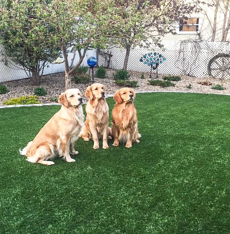 Residential Lawn Pet Turf
