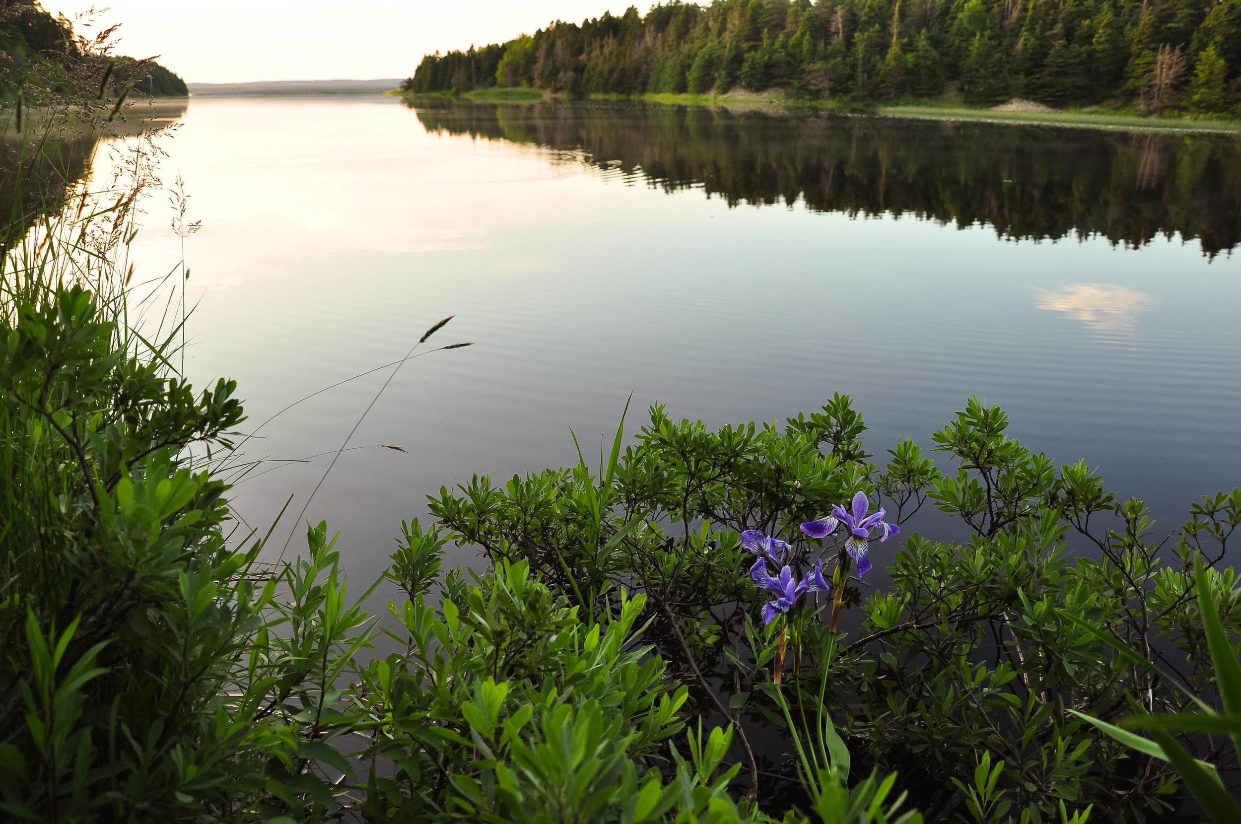 Environmental monitoring St. John's Newfoundland, Industrial environmental work