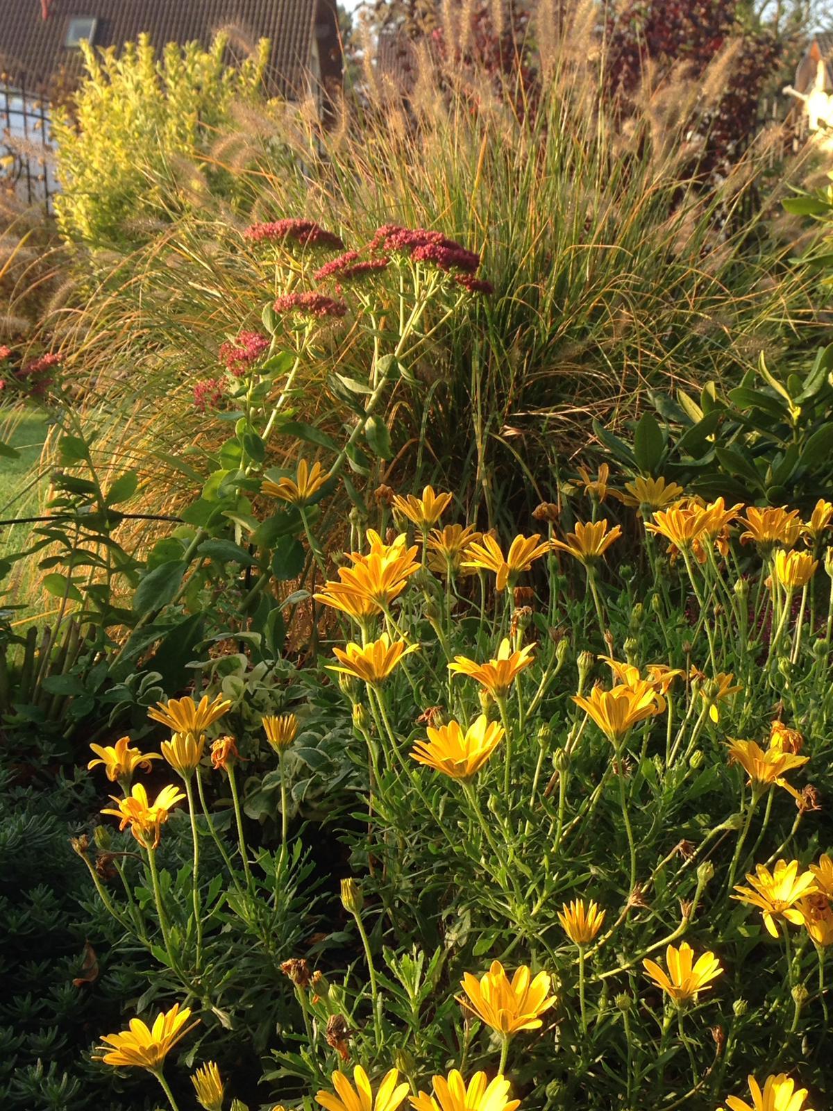 Gartenblumen Ludwigsfelde.JPG