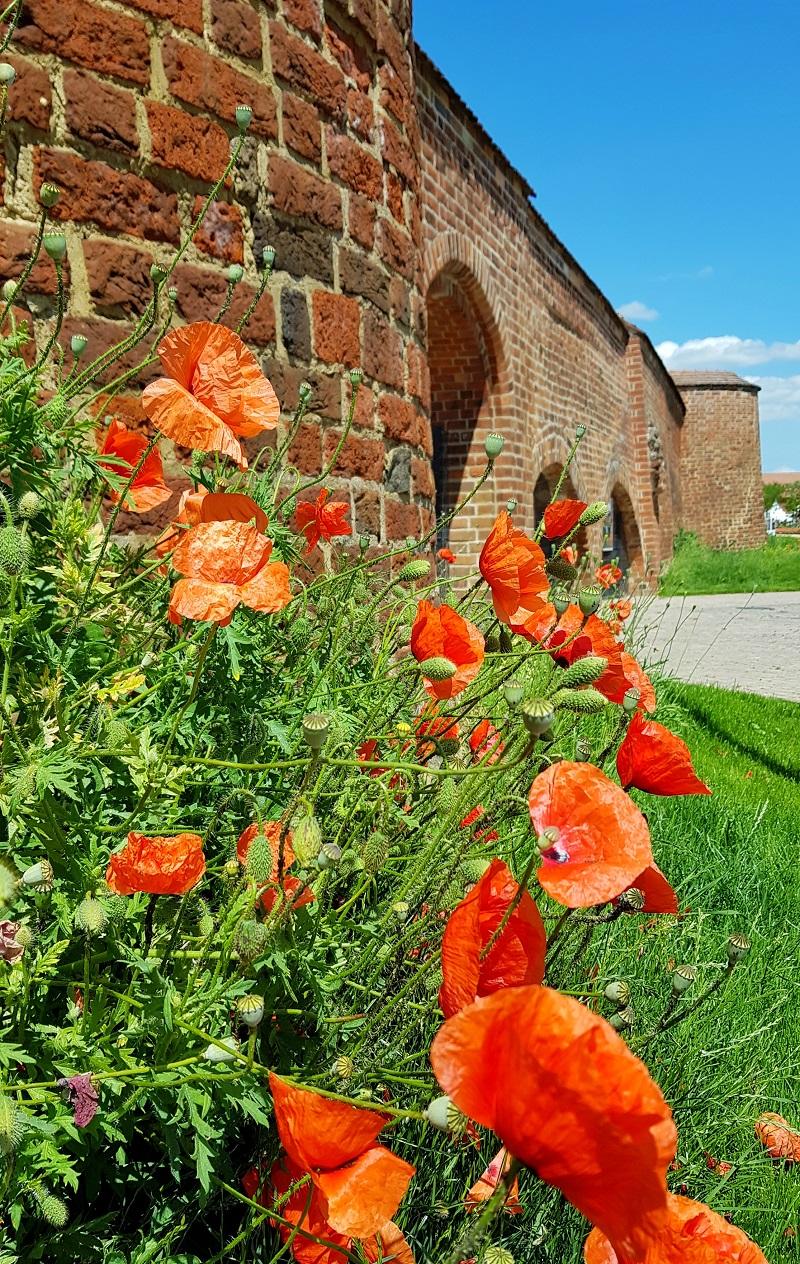 Stadtmauer LGS Wittstock Dosse.jpg