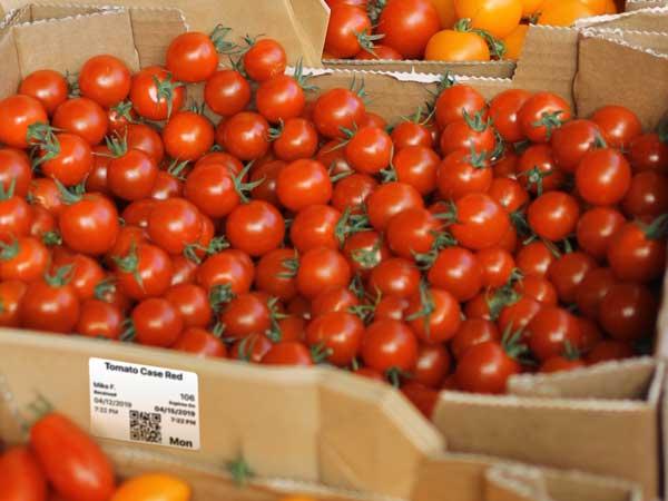 tomato-case-wlabel.jpg