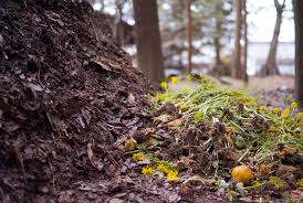 compost pic1.jpg