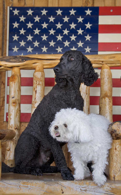 dogs-flag.jpg