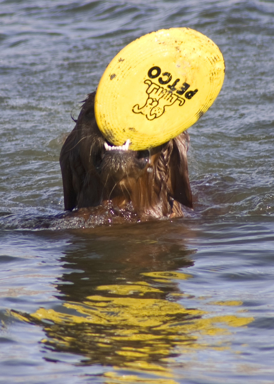Riley-frisbee.jpg