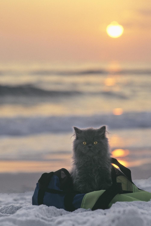 b-sunset.jpg