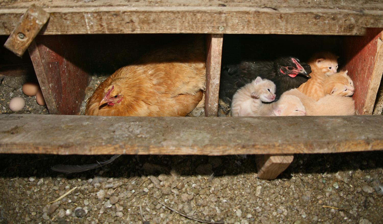 chickencoop.jpg