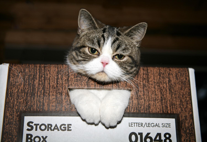 kotastoragebox.jpg