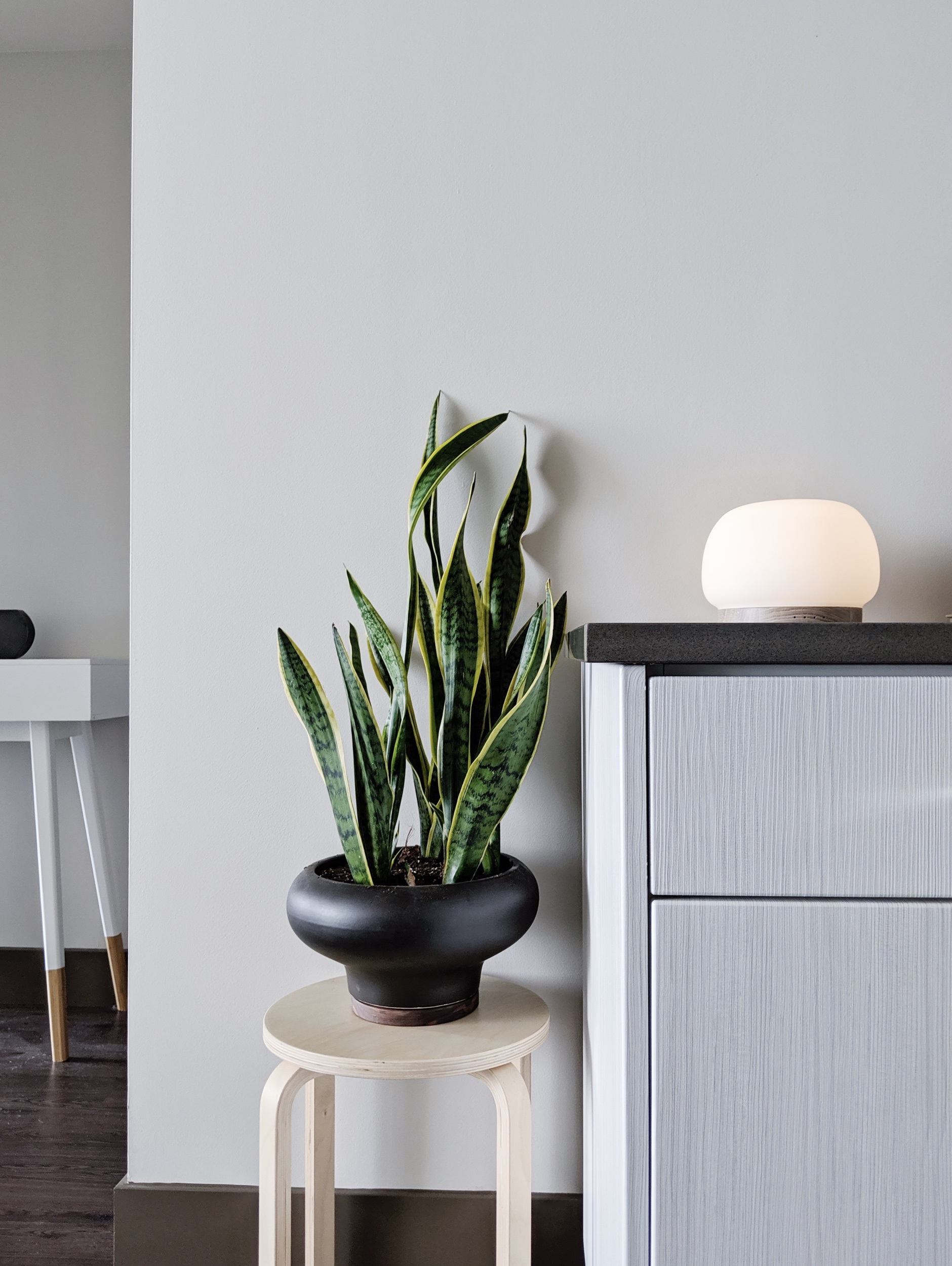 Planter  |  Stool  |  Diffuser  |  Features gifted products
