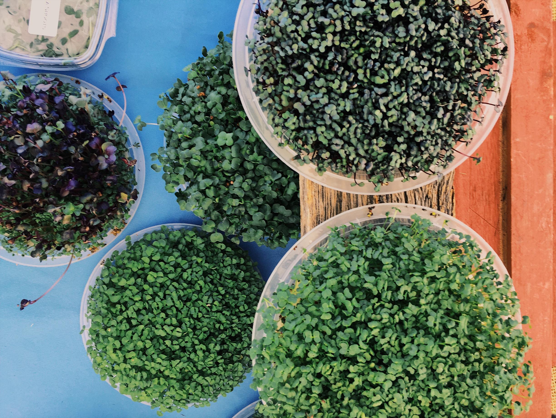 Growing Green Family Farms