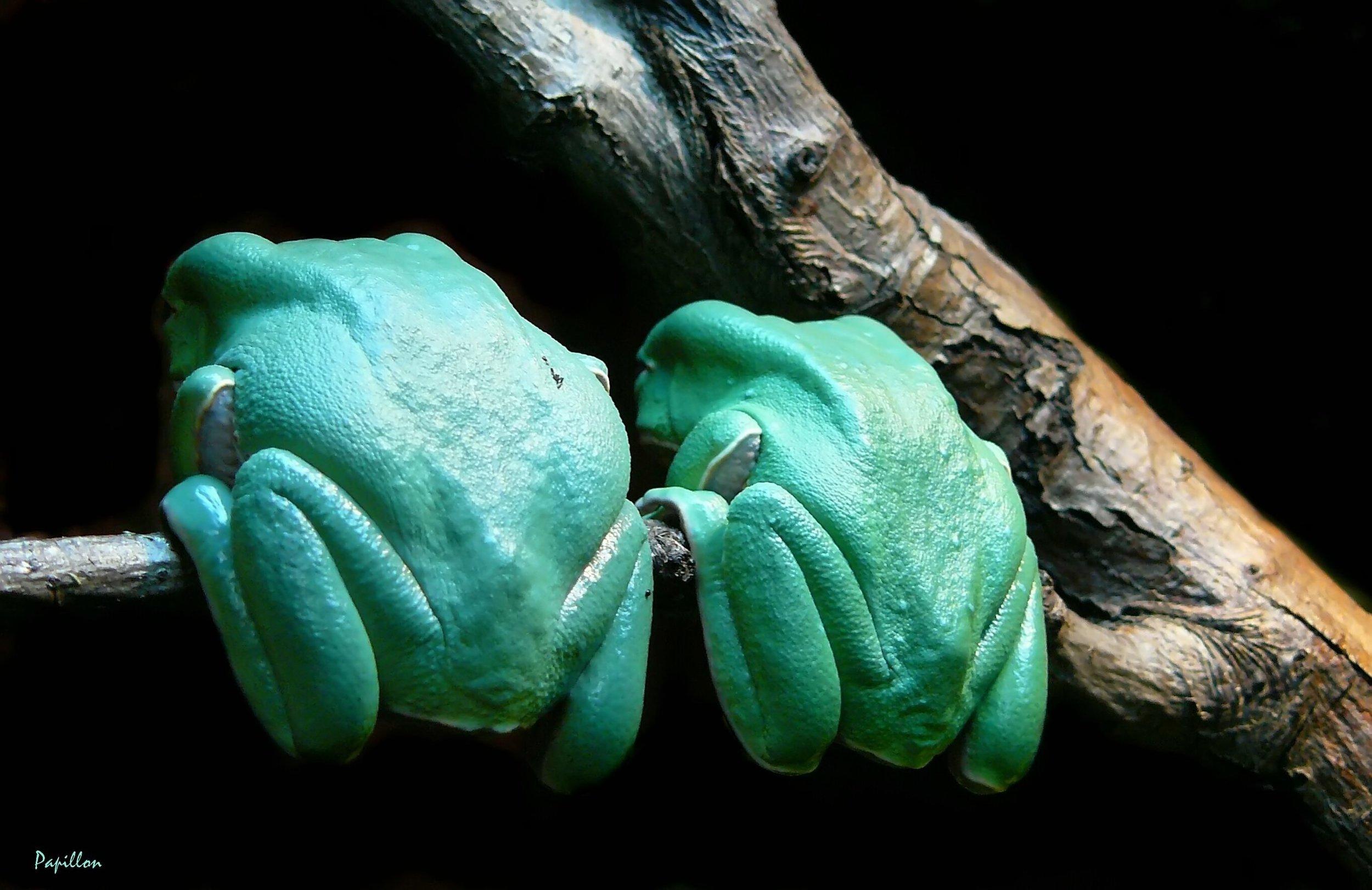 frog-250507 (2).jpg
